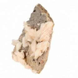 Ammoniet fossiel schaaltje hartvorm